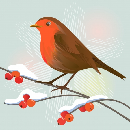 bird on branch: Robin and winter berries on a snowflake background