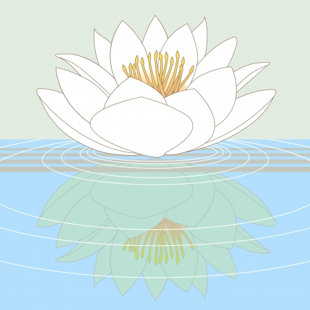 nymphaea: Lotus water lily reflected in pure water