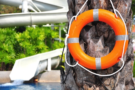 lifebuoy on tree by the pool