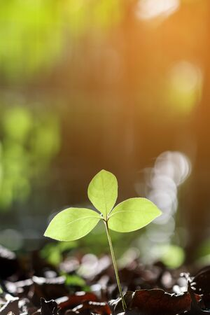 growing plant in garden with evening sunlight, shallow depth of field