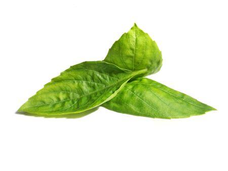 Basil leaf Closeup Herb Green Fresh