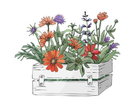 Garden  wooden light grey box with farm fresh cooking herbs and flowers. Rosemary, sage, purple chives (Allium) and other with leaves and flowers. Vector Isolated elements. Provence style.