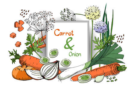 Vegetable vector sketch. A set of onion and carrot. Fresh onions, chives, allium, eschalot, carrots and leeks. Whole and cut into slices.  Isolated elements on white background.