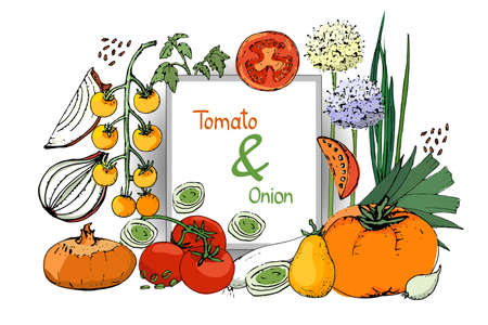 Vegetable vector sketch. A set of onion and tomatoes. Fresh onions, chives, allium, eschalot, tomato and leeks. Whole and cut into slices. Isolated elements on white background.