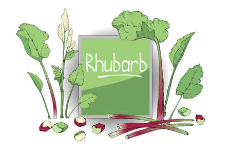 Vegetable vector set with rhubarb. Fresh pieplant with green leaves, green and red stems, white and pale yellow flowers, whole and cut into pieces. Also finger of rhubarb. Isolated elements on white. Vektorgrafik