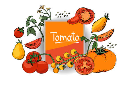 Billedresultat for tomato seeds clipart""