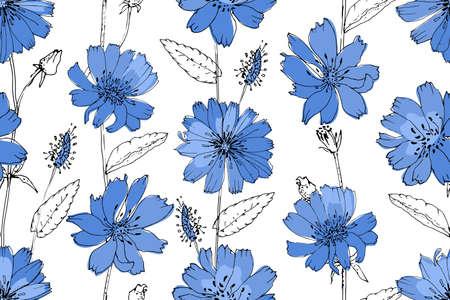 Modèle sans couture de vecteur floral art. Sucry bleu (chicorée) sur fond blanc. Fleurs, feuilles et bourgeons vectoriels isolés.