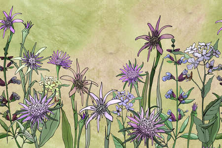Seamless floral border. Meadow and garden flowers and grass on a pastel green background. Purple oat root (tragopogon) and sage. 版權商用圖片