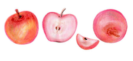 Apples and apple slices with seeds and  petiole. Pink and red fruits separately from each other on a white background. Hand-drawn oil pastels. Reklamní fotografie