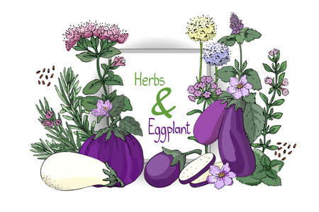 Vegetable vector set with cooking spicy herbs and eggplant. Rosemary, thyme, mint, oregano, melissa (sweet-Mary) with stems, branches, leaves and flowers. White and purple eggplants.