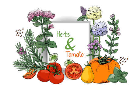 Vector set of culinary spicy herbs and tomatoes.  Rosemary, thyme, mint, oregano, melissa (sweet-Mary) with stems, branches, leaves and flowers. Red and orange tomatoes. Hand-drown sketch. Çizim