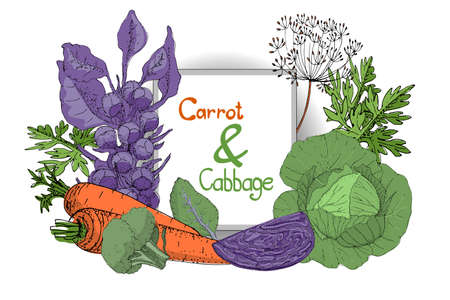 Vector plant set with fresh white cabbage, purple cabbage, green broccoli, purple brussels sprouts and orange carrot with leaves and seeds. Çizim