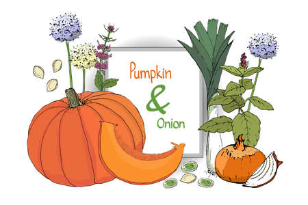Vector set with pumpkin and onion. Orange pumpkin with cut piece and seeds. Fresh onion, chives, allium, eschalot, leek. Blooming green basil. Juicy vegetables. Isolated elements on white background.