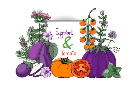 Vector set with eggplant and tomato. Purple eggplants with leaves and flowers, orange and red tomatoes. Cooking spicy herbs with stems and flowers: rosemary, savory thyme, oregano, mint, basil.