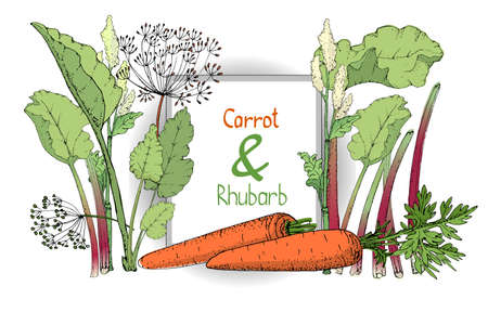 Vector set with rhubarb and carrot. Fresh pieplant with green leaves, green and red stems, white and pale yellow flowers, finger of rhubarb. Orange carrot with tops and seeds. Stock Illustratie