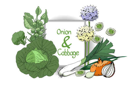 Vegetable vector set with onion and cabbage. Fresh onions, chives, allium, eschalot, leek. Fresh green cabbage, green broccoli, brussels sprouts. Vettoriali