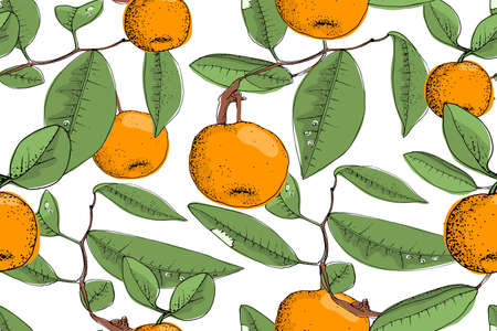 Art floral vector seamless pattern. Ripe orange mandarins ( tangerines) on the brown twigs with green leaves. Vector isolated elements on white background. For fabrics, wallpaper, home textiles, wrap.