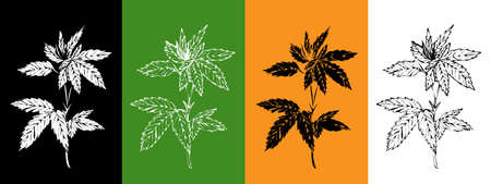 Vector set with hemp plant. Isolated cannabis leaves on black, green, orange, white background. For logo, illustration, banners, templates, booklets, pharmaceuticals, hemp oil and seeds.