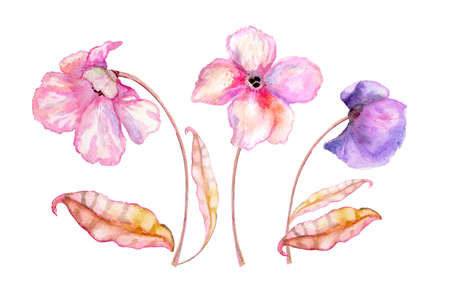 Watercolor pink flowers. Hand drawn illustration. Gentle flowers with stems and leaves isolated on white background. Zdjęcie Seryjne