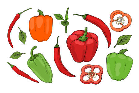 Vector set with red, green, orange pepper. Isolated fresh pepper, paprika, chilli with stems, leaves, seeds, whole and sliced. Summer harvest. For template, cards, menu, dietary brochures, spices. Ilustracja