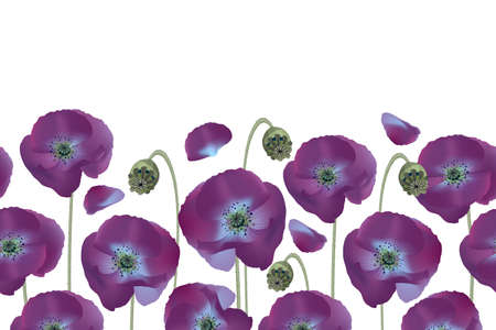 Vector floral seamless pattern, border. Purple poppies isolated on white background. Gentle flowers.