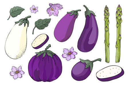Vector vegetable set. Sketch White, violet and purple eggplants with leaves and flowers, fresh green asparagus, sparrowgrass. Vector floral elements isolated on white background. Ilustracja