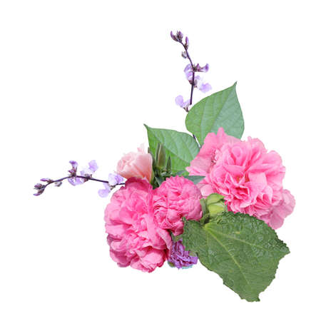 Pink garden flowers. Double pink mallow flowers, buds, branches of hyacinth dolichos, green leaves. Fresh flowers isolated on a white background. Reklamní fotografie
