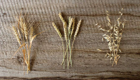 Rye, wheat, oats. Ripe spikelets on a wooden background. The harvest of cereals.