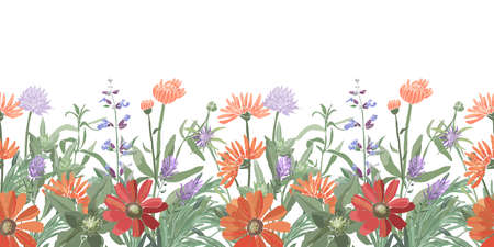Vector floral seamless border. Summer flowers, herbs, leaves. Gaillardia, marigold, oxeye daisy, calendula, rosemary, lavender, sage, allium. Orange, red, blue flowers isolated on a white background. Ilustrace