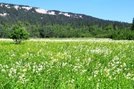 urals: Alpine meadows in the Urals