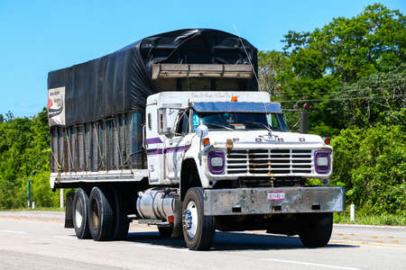roo: QUINTANA ROO, MEXICO - MAY 18, 2017: Agricultural truck Ford F-series at the interurban road.