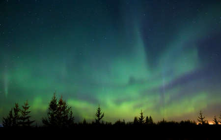 Northern lights (Aurora Borealis) over the forest
