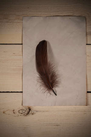 Brown goose feather and empty old paper sheet laying on the wooden desk