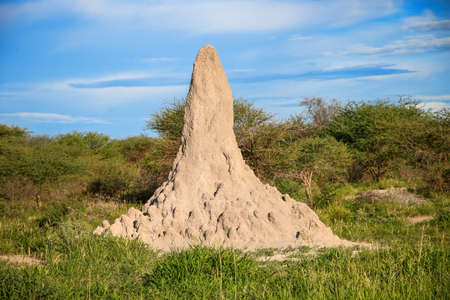 Termite mound in a South Africa
