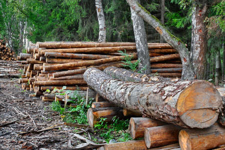 Woodpile of cut Lumber for forestry industry photo