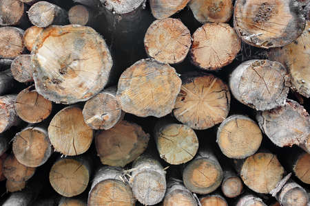 forestry industry: Woodpile of cut Lumber for forestry industry