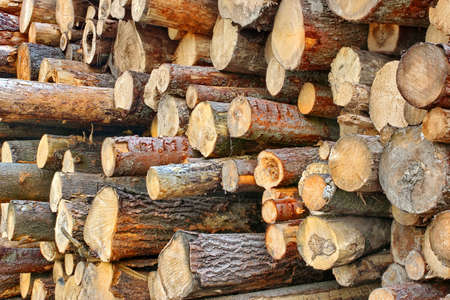 forestry industry: Woodpile of cut Lumber for forestry industry. Background with space for text or image.