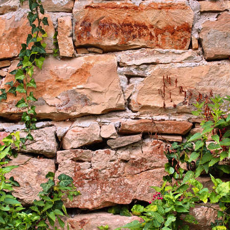 Old Stone Wall With Plants photo