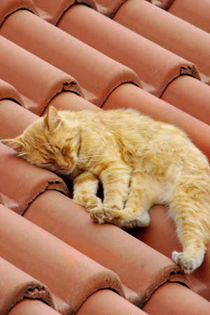 snoozing: Small Red White Kitty Snoozing on Roof Tile Stock Photo