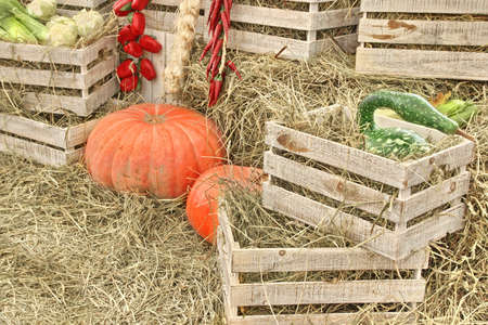 large pumpkin: Autumn Composition With Large Pumpkin on Straw and Wooden Crates