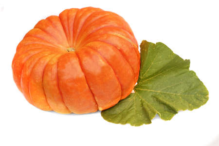 large pumpkin: Large Ripe Pumpkin with Leaf Isolated on White Background