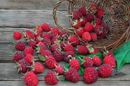 Many Ripe Raspberries With Leafs In Vintage Wicker Basket On The Rough Rustic Wood Table Background photo