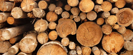 forestry industry: Large Woodpile From Big Pine Logs For Forestry Industry. Background And Texture With Space For Text Or Image Stock Photo