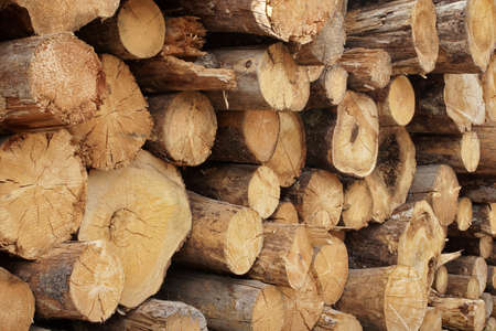 lumbering: Large Woodpile From Big Pine Logs For Forestry Industry. Background And Texture With Space For Text Or Image Stock Photo