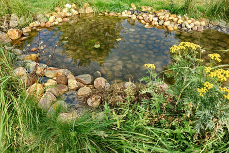 back yard pond: Small Artificial Decorative Pond With Rocks And Plants On The Backyard In Summer
