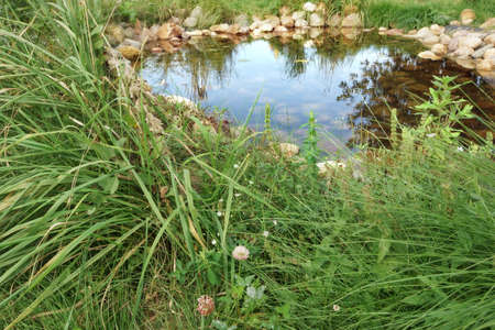 cane creek: Small Artificial Decorative Pond With Rocks And Plants On The Backyard In Summer