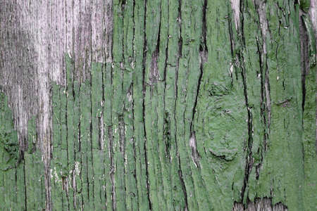 vintage timber: Old Weathered Painted Green Wood Background Texture. Vintage Timber Background. Peeled Green Paint On Old Wood Board.
