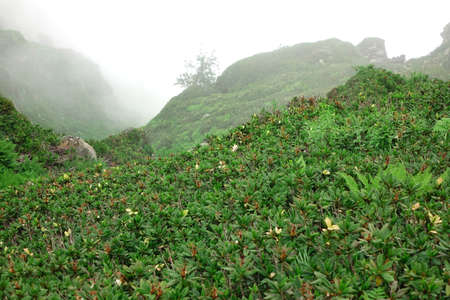 inclement weather: Mountain Landscape In Bad Foggy Weather And Edelweiss Or Leontopodium Flowers Blooming In Front Of  Hillside Stock Photo