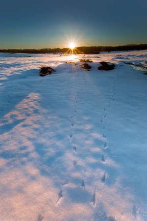 winter sunrise: Snowed landscape in a cold winter sunrise