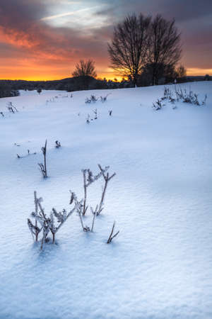 snowed: Snowed landscape in a cold winter sunrise